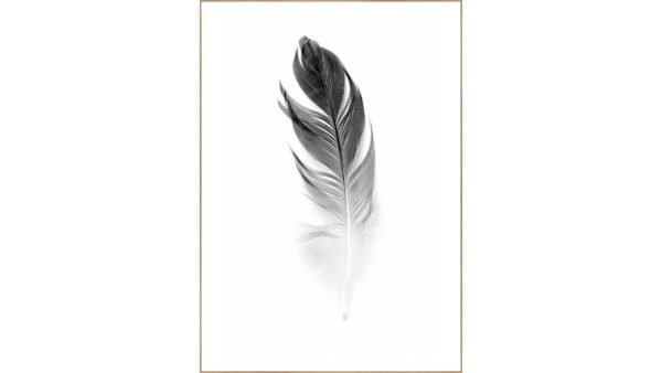 Kunstdruck Soft Feather