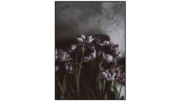 Posterboard Dark tulips mit Rahmen